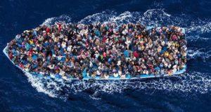 migrans hajo_576